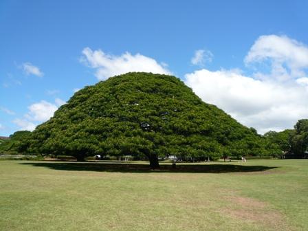 hawaii1-793.jpg