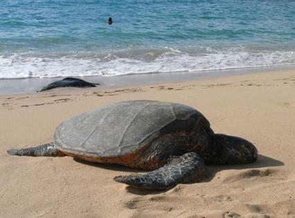 hawaii2-867.jpg