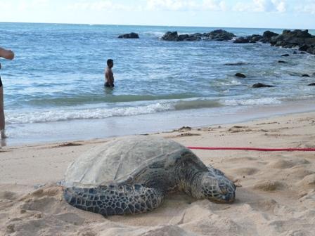 hawaii2-870.jpg